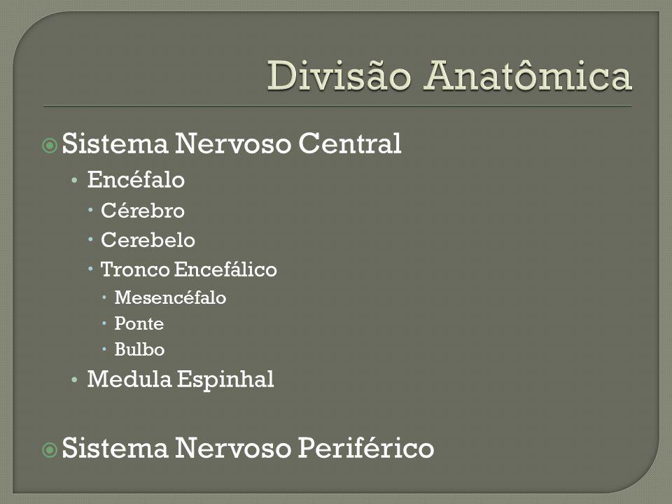Divisão Anatômica Sistema Nervoso Central Sistema Nervoso Periférico