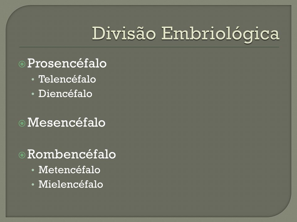 Divisão Embriológica Prosencéfalo Mesencéfalo Rombencéfalo Telencéfalo