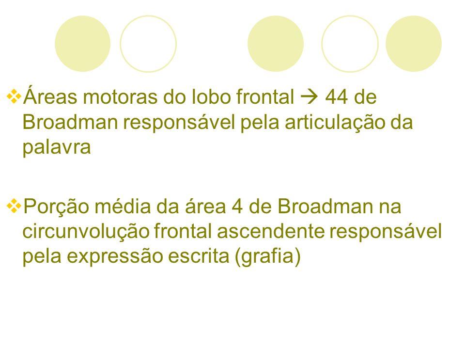 Áreas motoras do lobo frontal  44 de Broadman responsável pela articulação da palavra