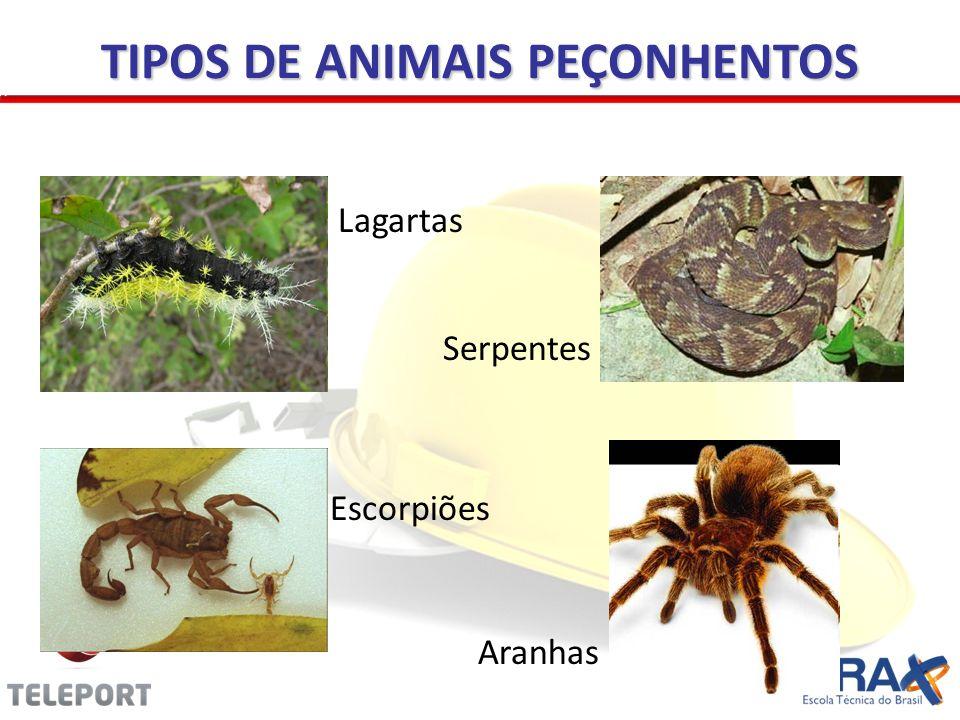 TIPOS DE ANIMAIS PEÇONHENTOS
