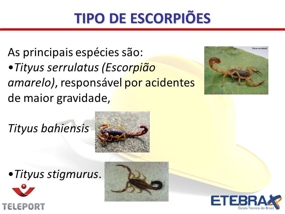 TIPO DE ESCORPIÕES As principais espécies são: