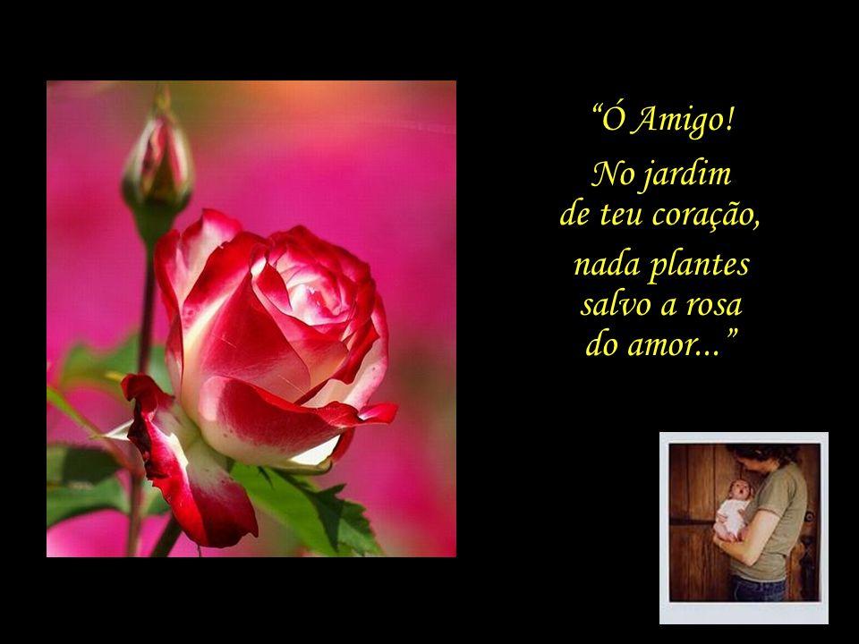 Ó Amigo! No jardim de teu coração, nada plantes salvo a rosa