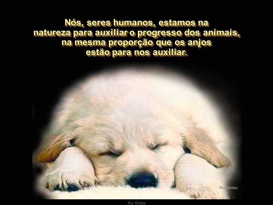 Nós, seres humanos, estamos na natureza para auxiliar o progresso dos animais, na mesma proporção que os anjos estão para nos auxiliar.