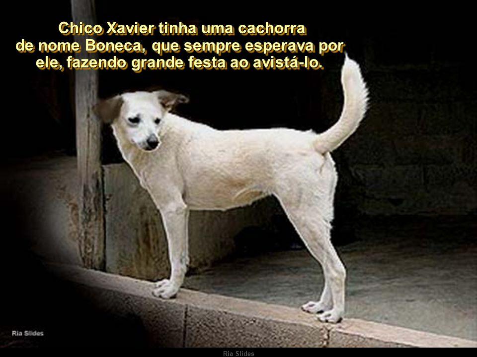 Chico Xavier tinha uma cachorra de nome Boneca, que sempre esperava por ele, fazendo grande festa ao avistá-lo.