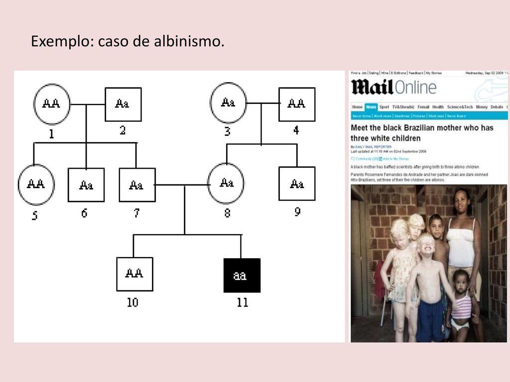 Muito HEREDOGRAMA Diagrama, semelhante a uma árvore genealógica, - ppt  ZH03