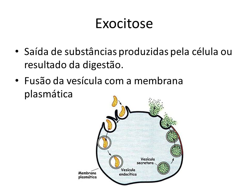 Exocitose Saída de substâncias produzidas pela célula ou resultado da digestão.