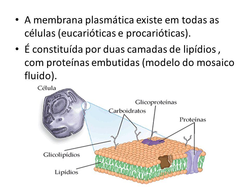 A membrana plasmática existe em todas as células (eucarióticas e procarióticas).