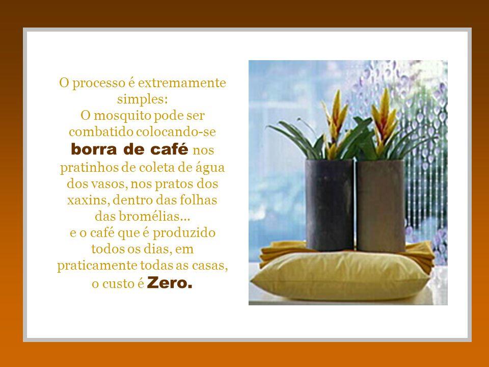 O processo é extremamente simples: O mosquito pode ser combatido colocando-se borra de café nos pratinhos de coleta de água dos vasos, nos pratos dos xaxins, dentro das folhas das bromélias...