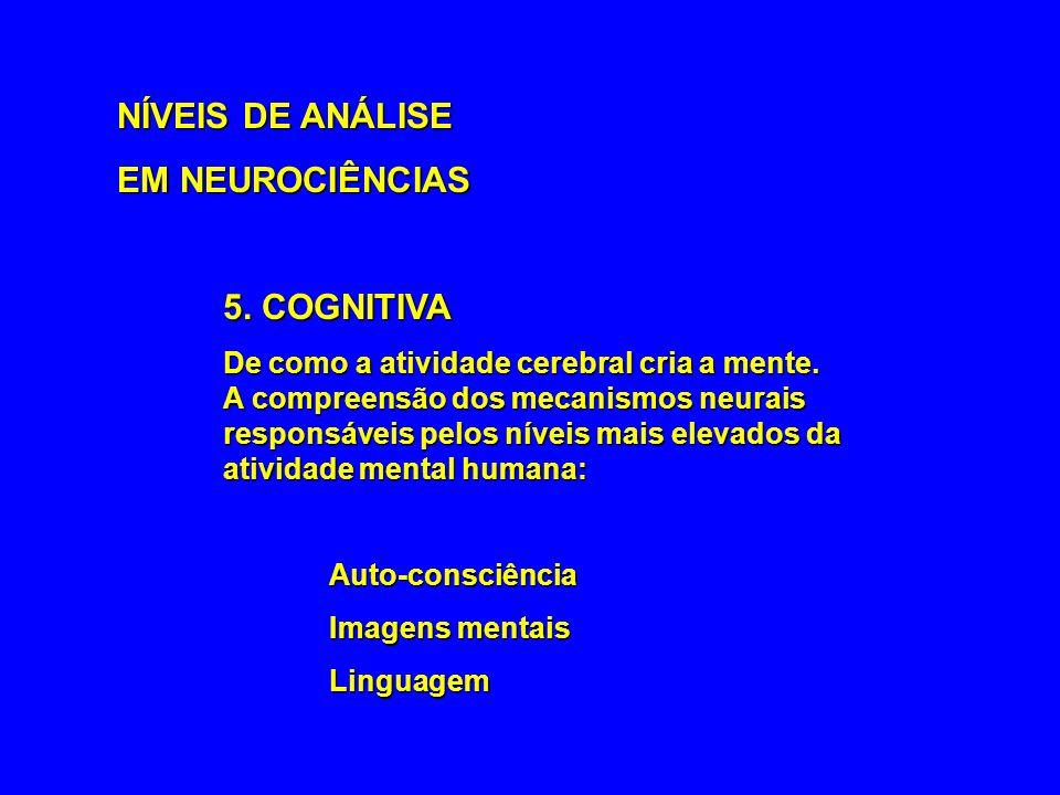 NÍVEIS DE ANÁLISE EM NEUROCIÊNCIAS 5. COGNITIVA Auto-consciência
