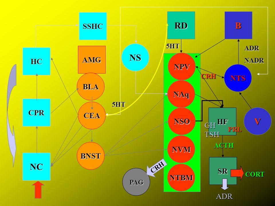 RD B NS V NC SSHC AMG HC NPV NTS BLA NAq CPR CEA NSO HF GH TSH NVM