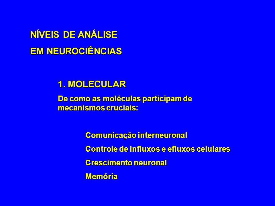 NÍVEIS DE ANÁLISE EM NEUROCIÊNCIAS 1. MOLECULAR
