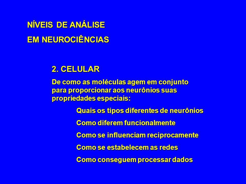 NÍVEIS DE ANÁLISE EM NEUROCIÊNCIAS 2. CELULAR
