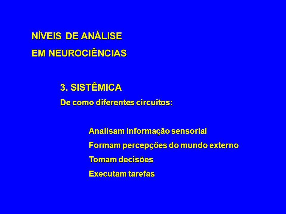 NÍVEIS DE ANÁLISE EM NEUROCIÊNCIAS 3. SISTÊMICA