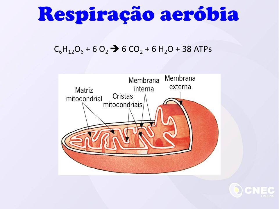 Respiração aeróbia C6H12O6 + 6 O2  6 CO2 + 6 H2O + 38 ATPs