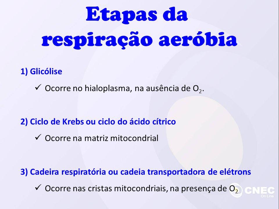 Etapas da respiração aeróbia 1) Glicólise