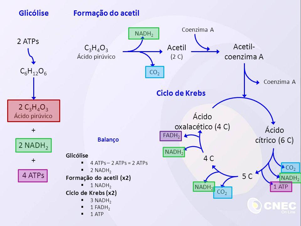 Glicólise Formação do acetil 2 ATPs C3H4O3 Acetil Acetil-coenzima A