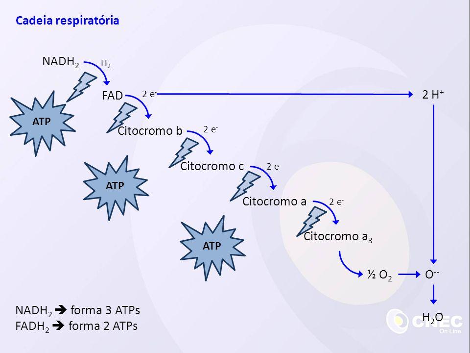 Cadeia respiratória NADH2 FAD 2 H+ Citocromo b Citocromo c Citocromo a