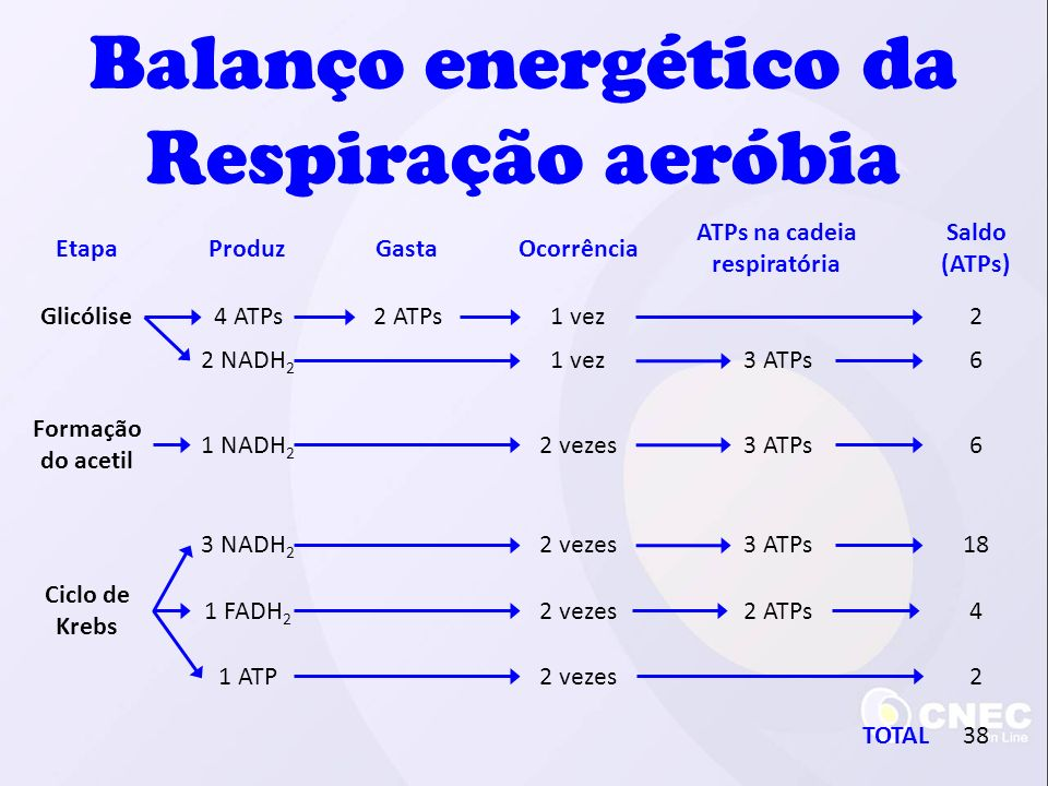 ATPs na cadeia respiratória