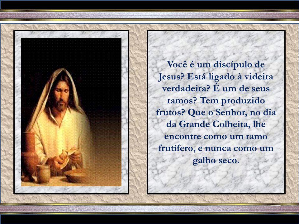 Você é um discípulo de Jesus. Está ligado à videira verdadeira