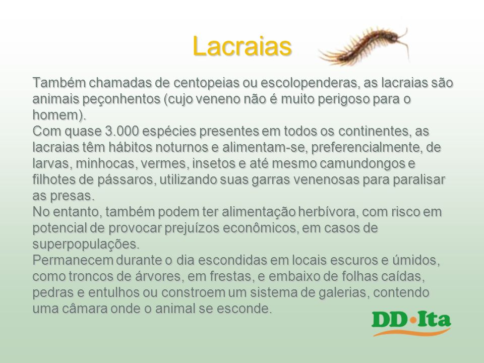 Lacraias Também chamadas de centopeias ou escolopenderas, as lacraias são. animais peçonhentos (cujo veneno não é muito perigoso para o.