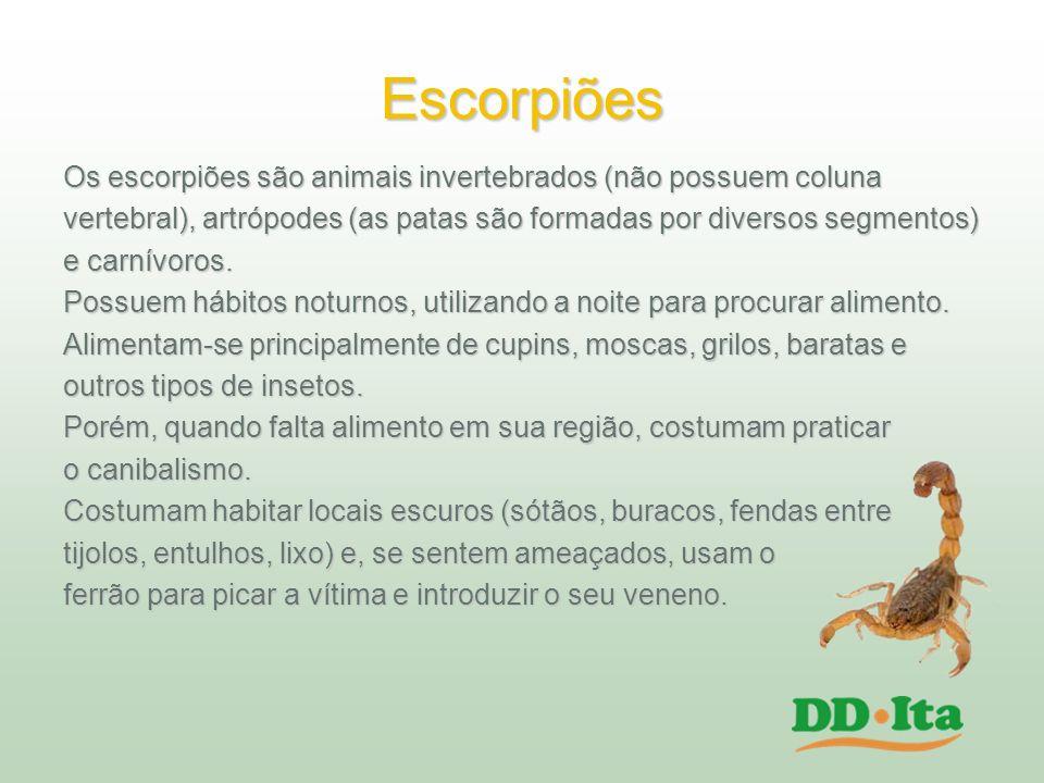 Escorpiões Os escorpiões são animais invertebrados (não possuem coluna
