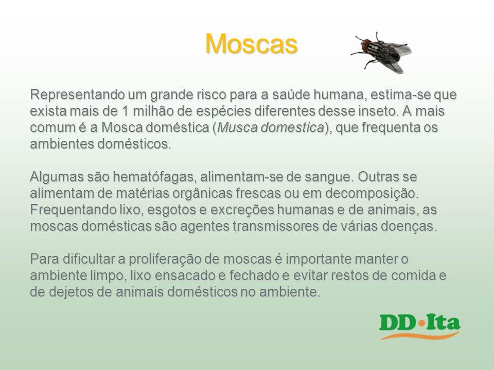 Moscas Representando um grande risco para a saúde humana, estima-se que. exista mais de 1 milhão de espécies diferentes desse inseto. A mais.