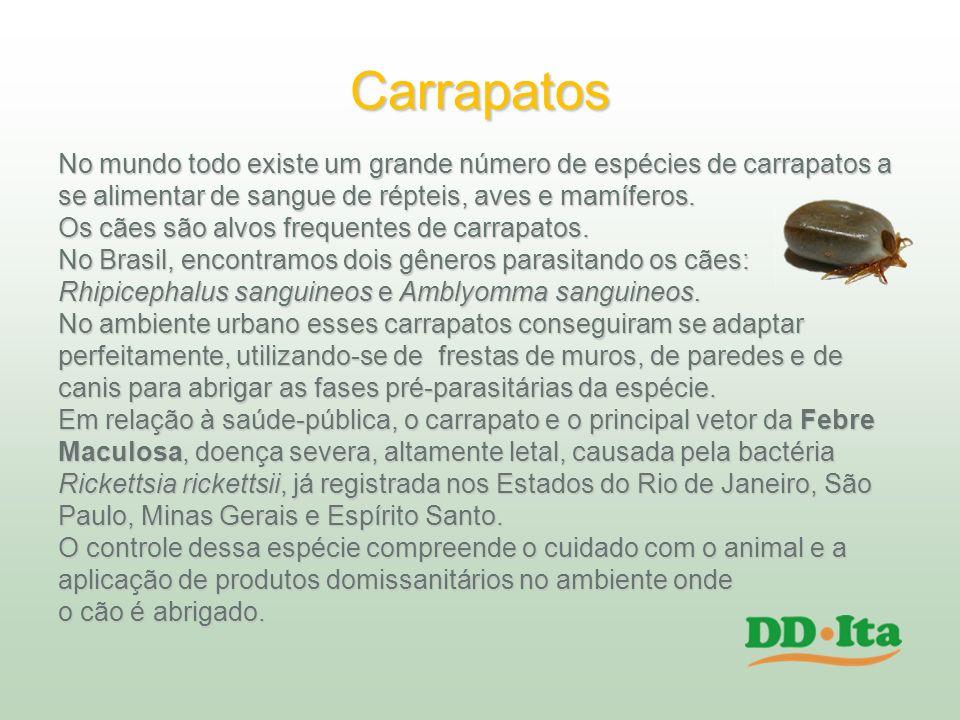 Carrapatos No mundo todo existe um grande número de espécies de carrapatos a. se alimentar de sangue de répteis, aves e mamíferos.