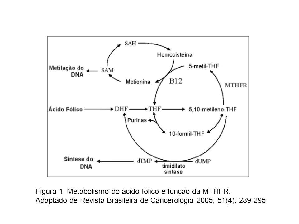 Figura 1. Metabolismo do ácido fólico e função da MTHFR.