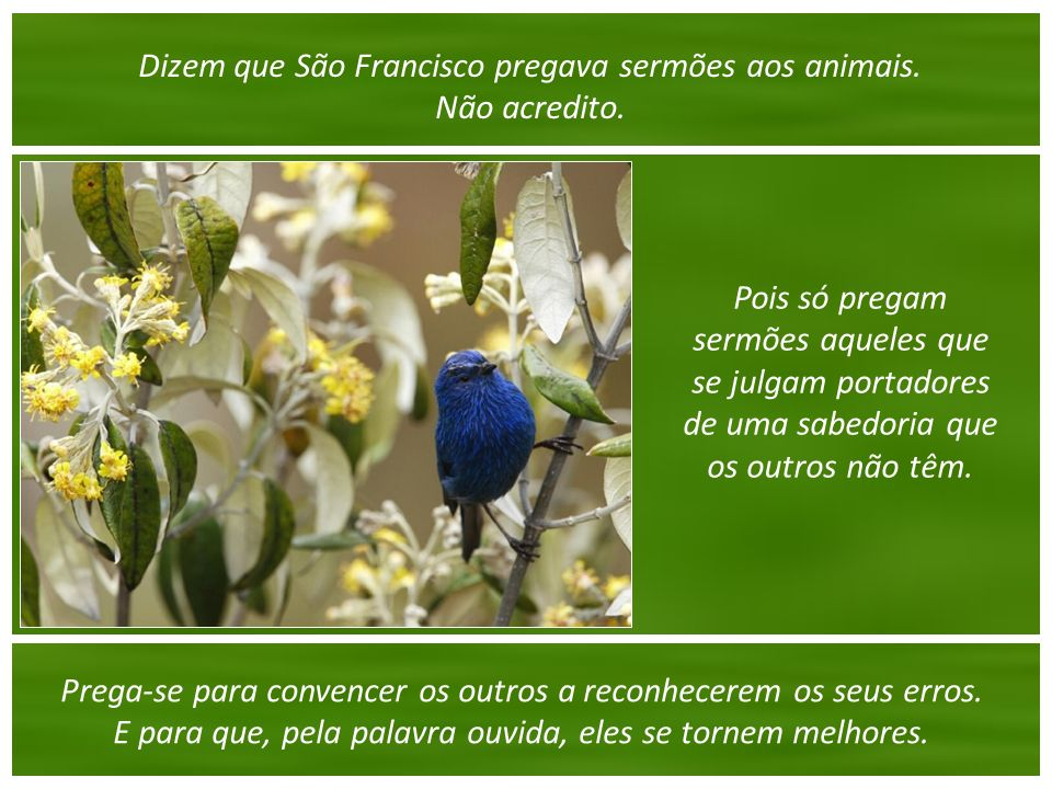 Dizem que São Francisco pregava sermões aos animais. Não acredito.