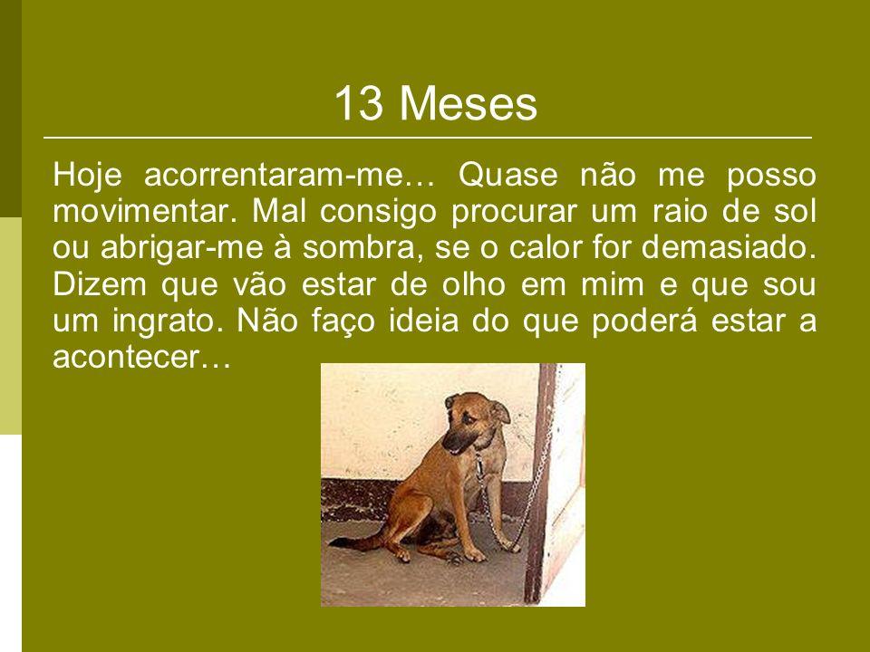 13 Meses