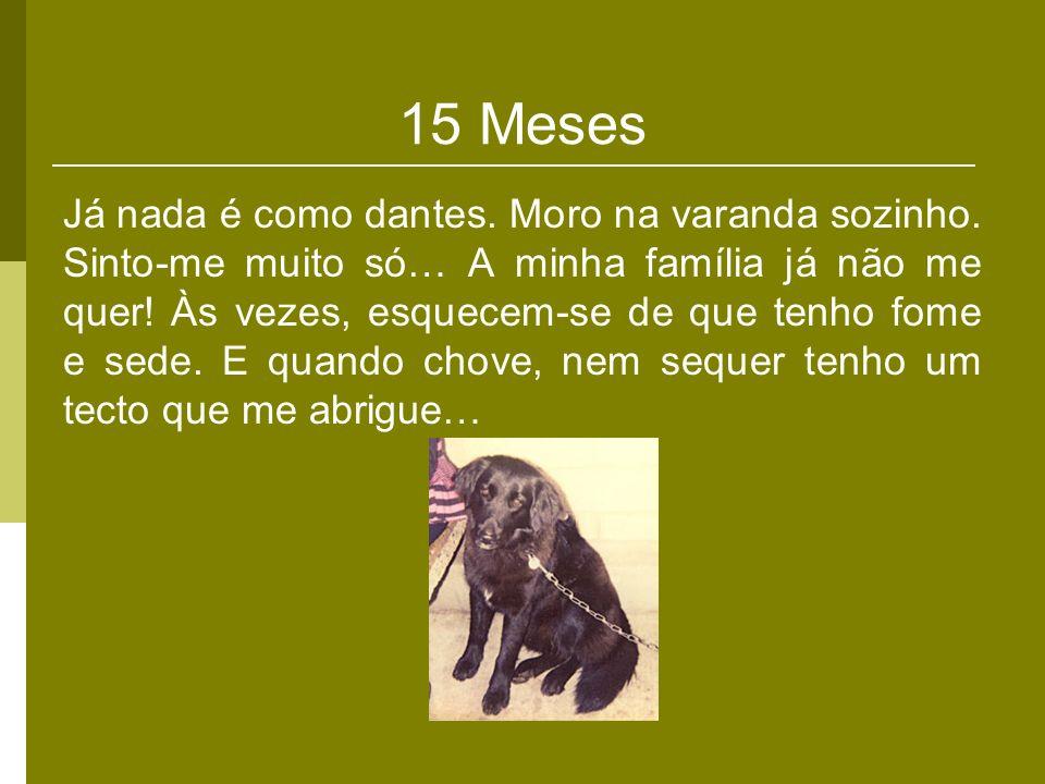 15 Meses