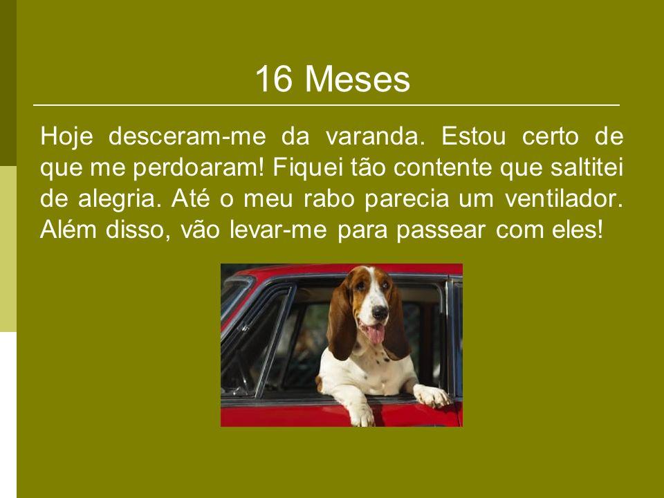 16 Meses