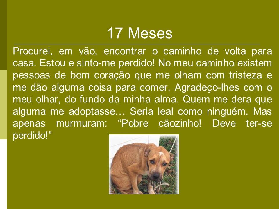 17 Meses