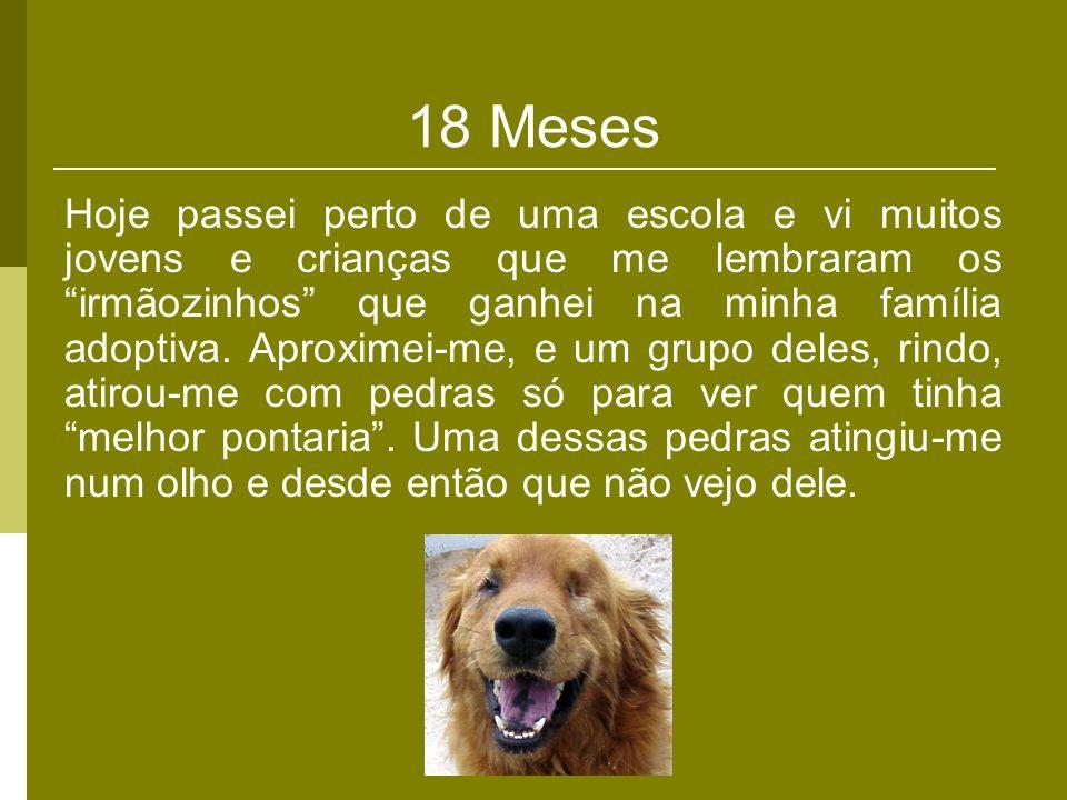 18 Meses