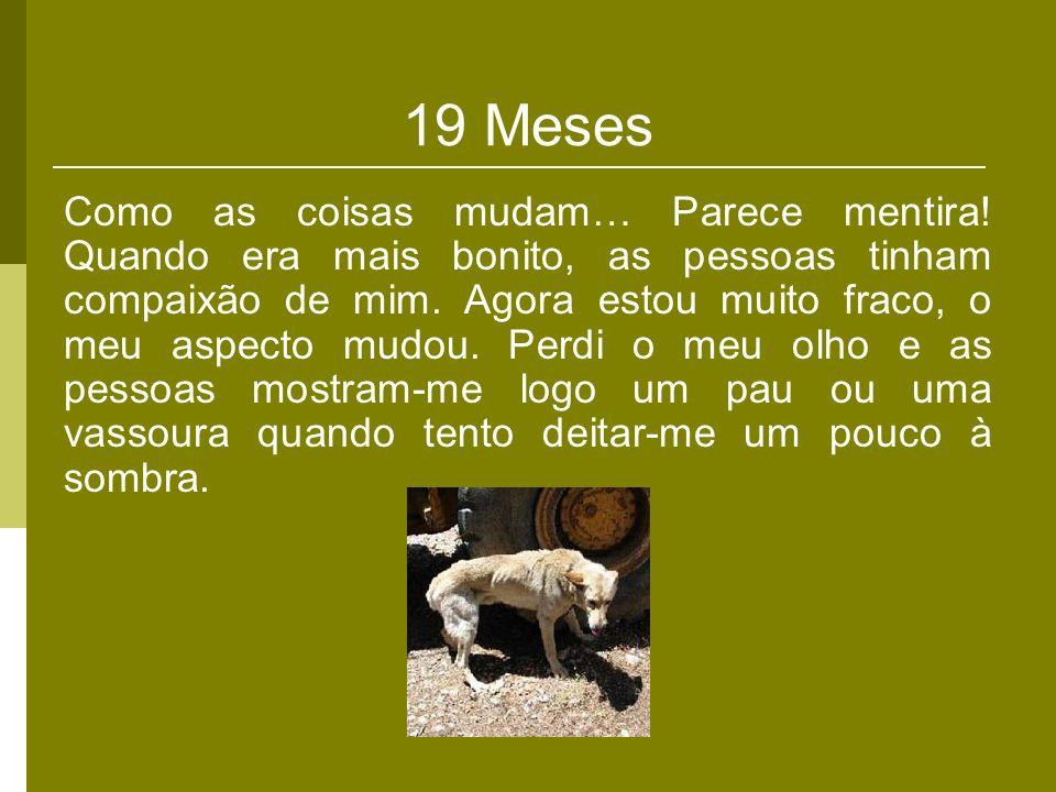19 Meses