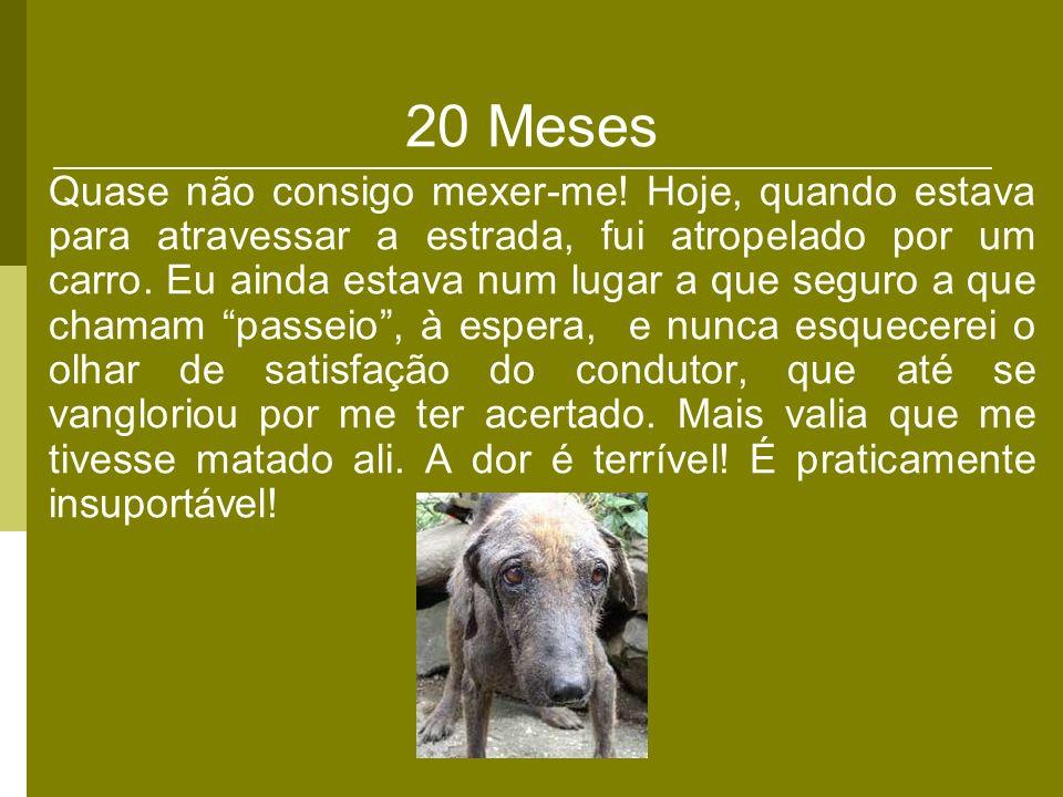 20 Meses