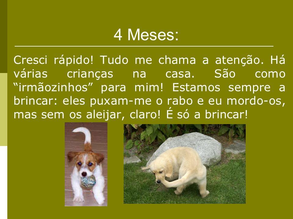4 Meses: