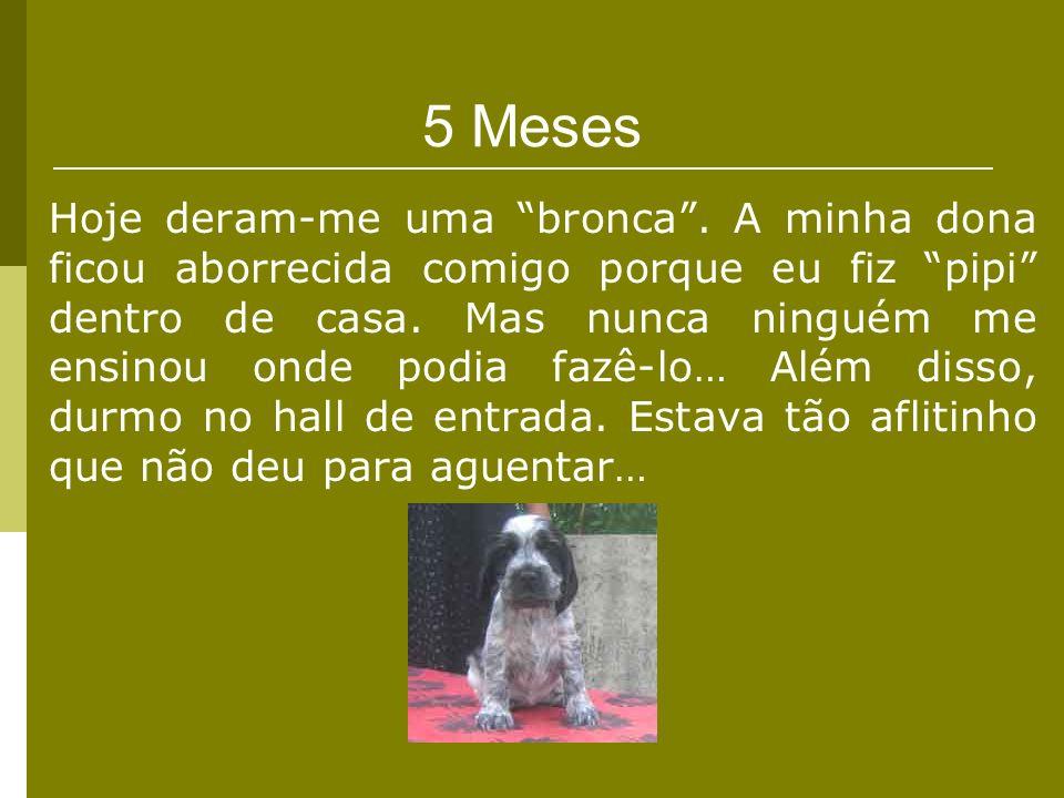 5 Meses