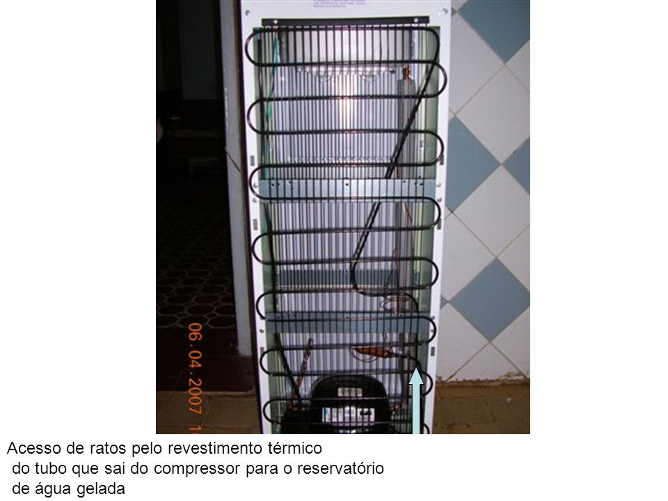 Acesso de ratos pelo revestimento térmico