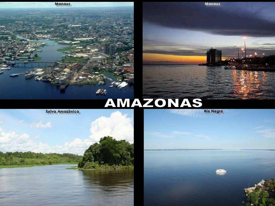 AMAZONAS 4. A Petrobrás é a única