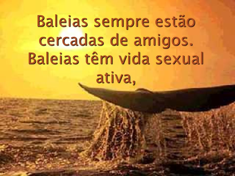 Baleias sempre estão cercadas de amigos. Baleias têm vida sexual ativa,
