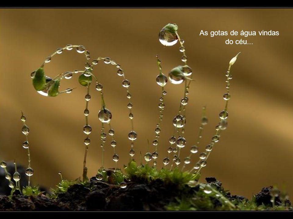As gotas de água vindas do céu...