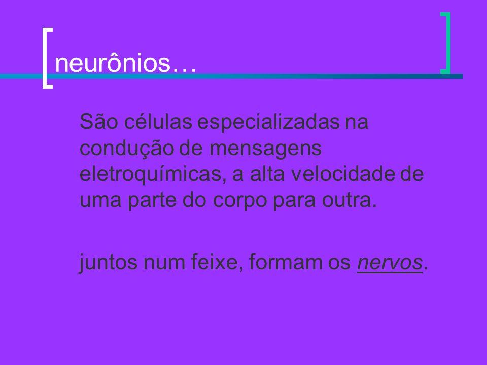 neurônios… São células especializadas na condução de mensagens eletroquímicas, a alta velocidade de uma parte do corpo para outra.