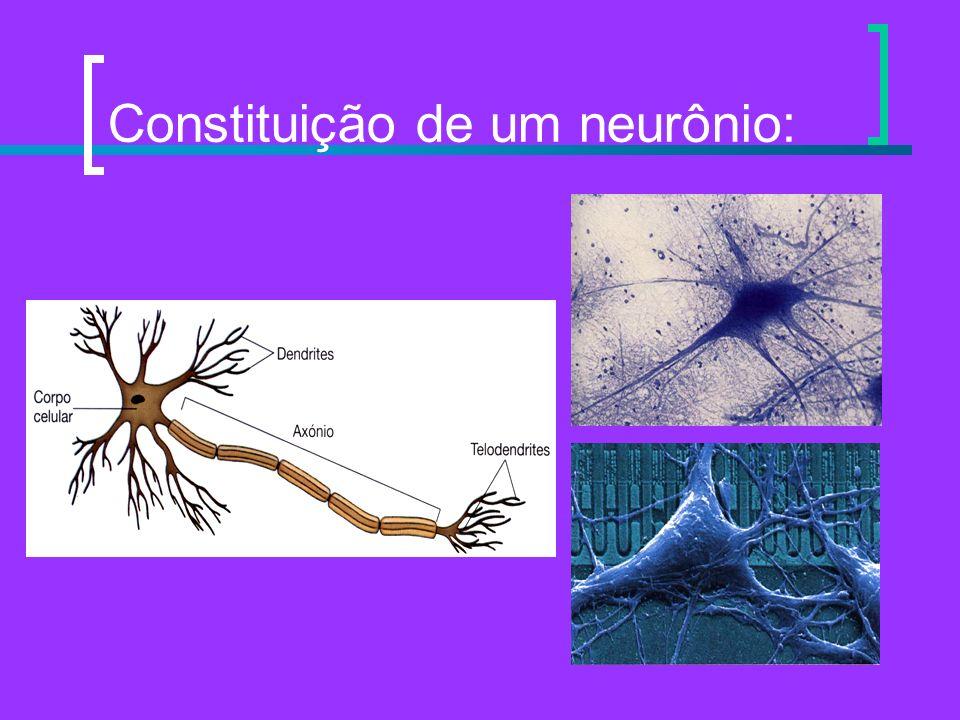 Constituição de um neurônio: