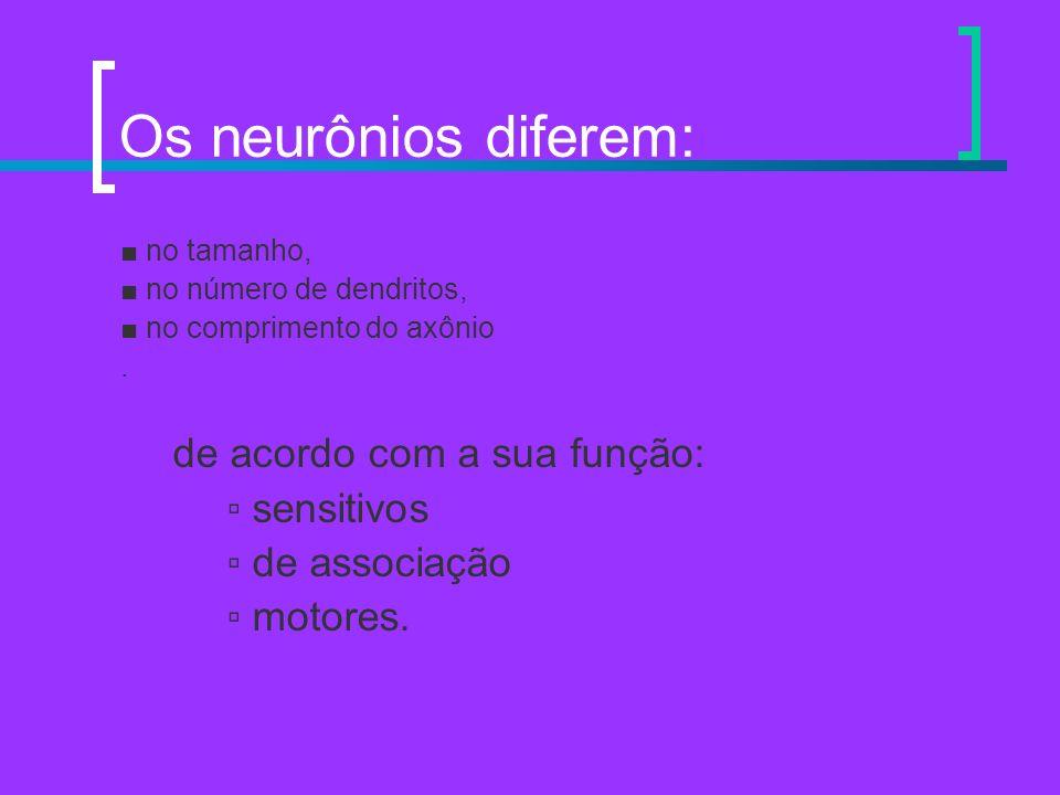 Os neurônios diferem: de acordo com a sua função: ▫ sensitivos