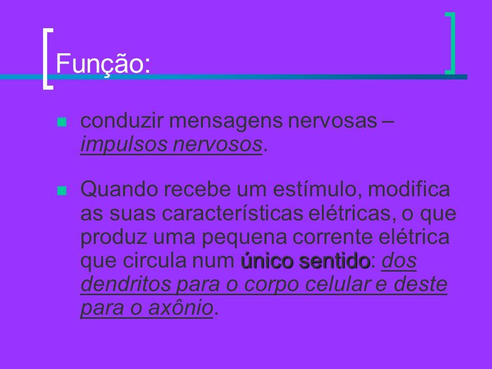 Função: conduzir mensagens nervosas – impulsos nervosos.