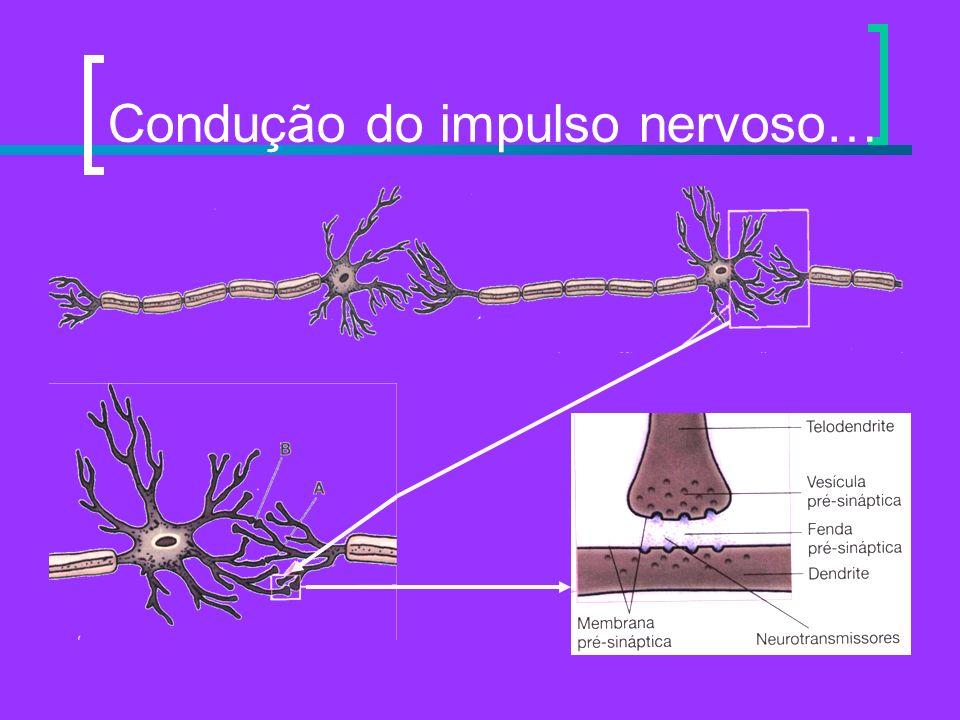 Condução do impulso nervoso…