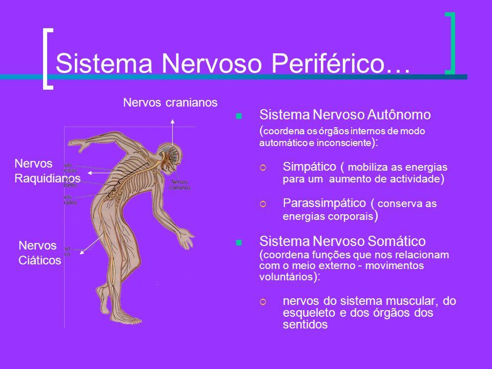 Sistema Nervoso Periférico…