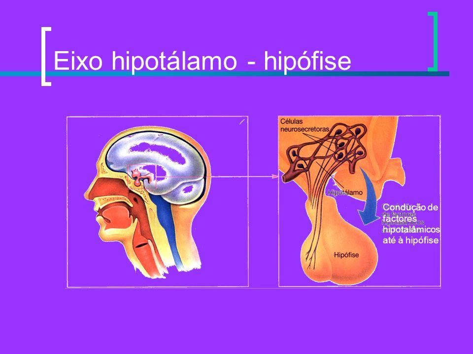 Eixo hipotálamo - hipófise