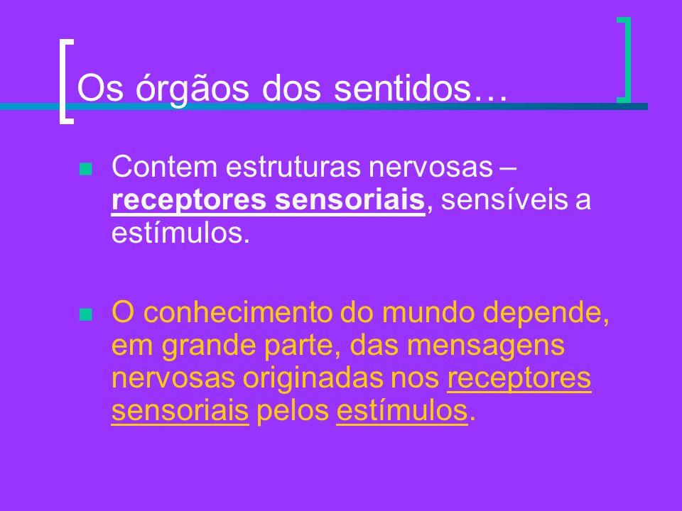 Os órgãos dos sentidos…